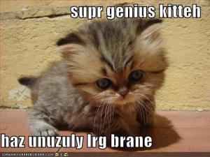 It's a kitty!